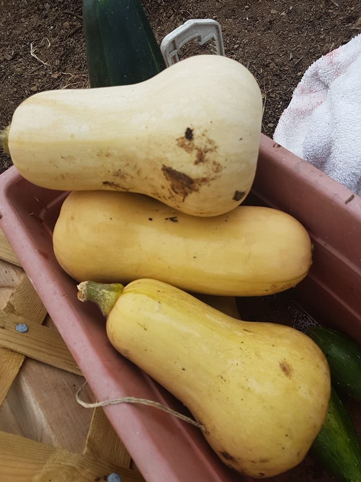 Brier Island Lodge food Greenhouse squash