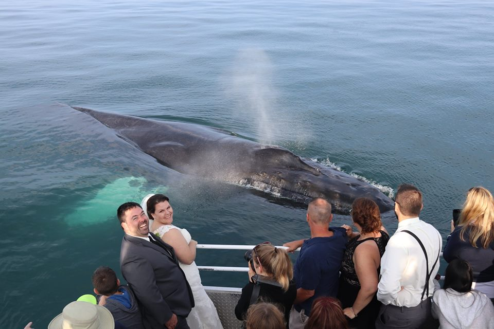 Brier Island Lodge Wedding Mariner Cruises Whale Watching